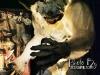 darkzone14_HAAShow_2013_-_Photo_by_DesignByAly.com